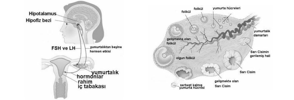    Medicana Konya Tüp Bebek Merkezi